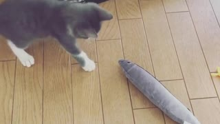 Cat likes his Fish Toy - Video