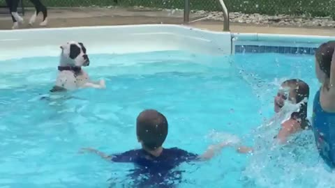 Dog mimics kids in pool after learning how to splash