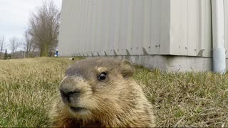 Curious Gopher Closely Examines GoPro Camera