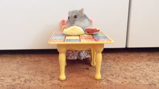 Mouse plays on fisher-price kitchen set