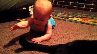 Baby enjoys playtime with the family cat - Video