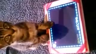 Kitten Plays iPad Game - Video