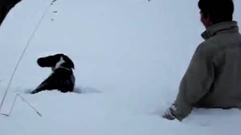 Beagle pup's first experience with deep snow