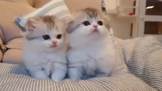 look at these cute kittens
