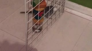 bunny and bird meet  - Video