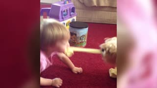 Little Girl And Dog Play Tug Of War With Socks - Video