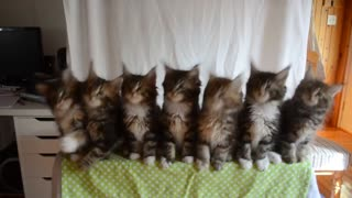 Seven cute kittens with a great reflexes - Video