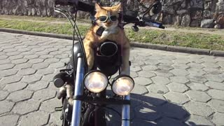 Feline Motorcycle Club (Part 1) - Video