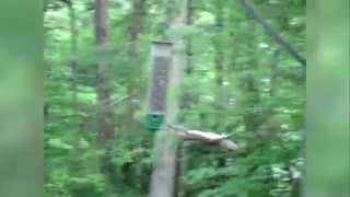 Squirrel Found Out What Is Adrenaline! - Video