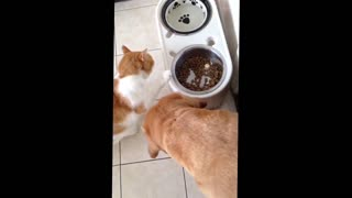 Sharing food - Video