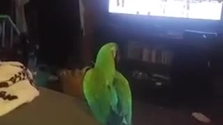 Parrot loves to dance to karaoke - Video