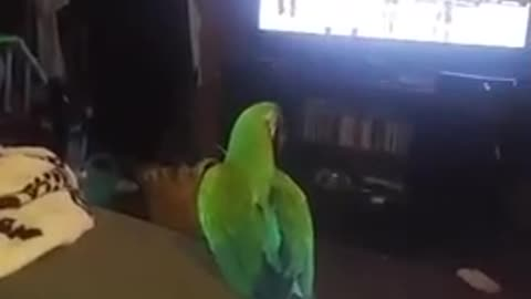 Parrot loves to dance to karaoke