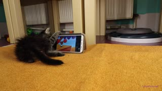 Rescued kitten loves watching 'Tom & Jerry' on smartphone