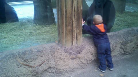 Baby Boy Plays Hide And Seek With Baby Ape