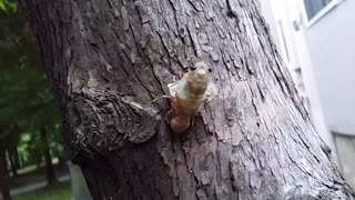 Amazing Footage Of A Cicada Coming Out A Shell - Video
