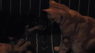 Puppy moves away from sneezing cat  - Video