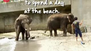 Elephants Hit the Beach - Video