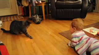 Baby laughs hysterically at cat chasing laser - Video