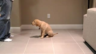 One very clever dog doing tricks - Video