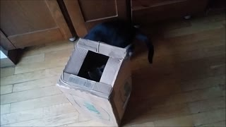 Kittens playing inside the box - Funny - Video