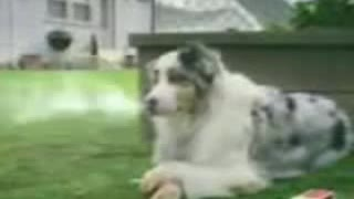 Dog Smoke Cigarette & Cat Stop laughing - Video