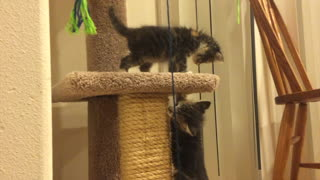 Heart-melting: A day in the life of two crazy kittens - Video