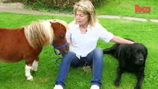 Tiny Horse: Cute Steed Suffers From Dwarfism - Video