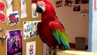 Parrot dancing to Michael Jackson
