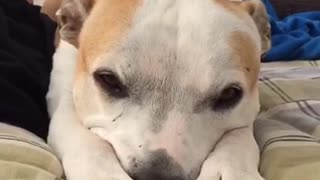 Sleepy dog isn't ready to start her day yet  - Video