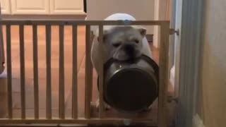 Resourceful Bulldog throws bowl through gate - Video