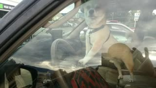 Dog Lays On The Horn In A Parking Lot - Video