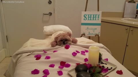 Munchkin the Teddy Bear enjoys day at the spa