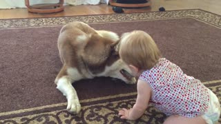 Baby attempts to reclaim favorite toy from dog