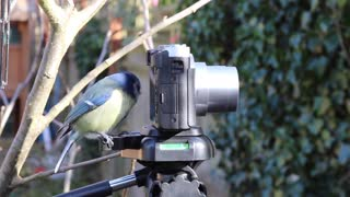 Watch how the bird stands next to and plays with the visualization camera