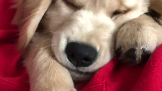 Puppy's squishy fluffy face will brighten your day