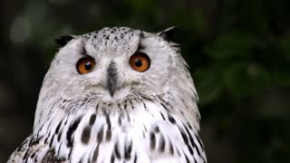Owl animal bird nature