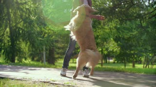 A Boy Playing With His Dog | Romantic
