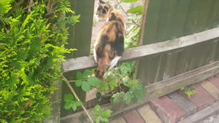 My cat jumping through fence