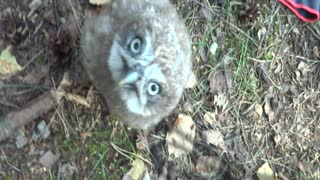 Just Hanging With A Baby Owl When...
