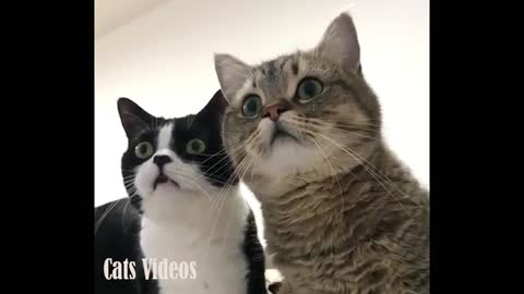Two cats watching television with surprise