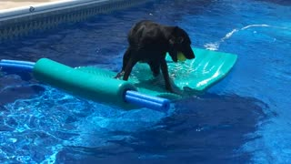 Clever dog rides pool float to fetch ball - Video
