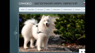 Best Dogs' Websites - Video