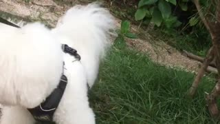 White small Dogy Loves OutDoors