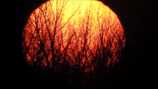 Bright orange sunset sets behind row of trees - Video