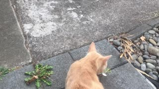 cats fighting Jan-23-2021 #shorts #funny #cute #adorable