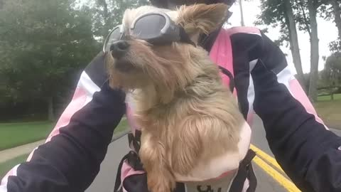 "Tiny Dog In Goggles ""Rides Dirty"" On Bike"