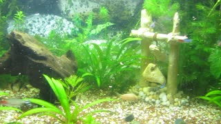 How to decorate a beautiful green fish tank (deco-ideea)  - Video