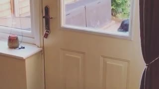 Black shepherd dog opens and closes a door by himself  - Video