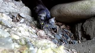 Cat Found on Island - Video