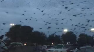 Skies Filled with Swarm of Blackbirds